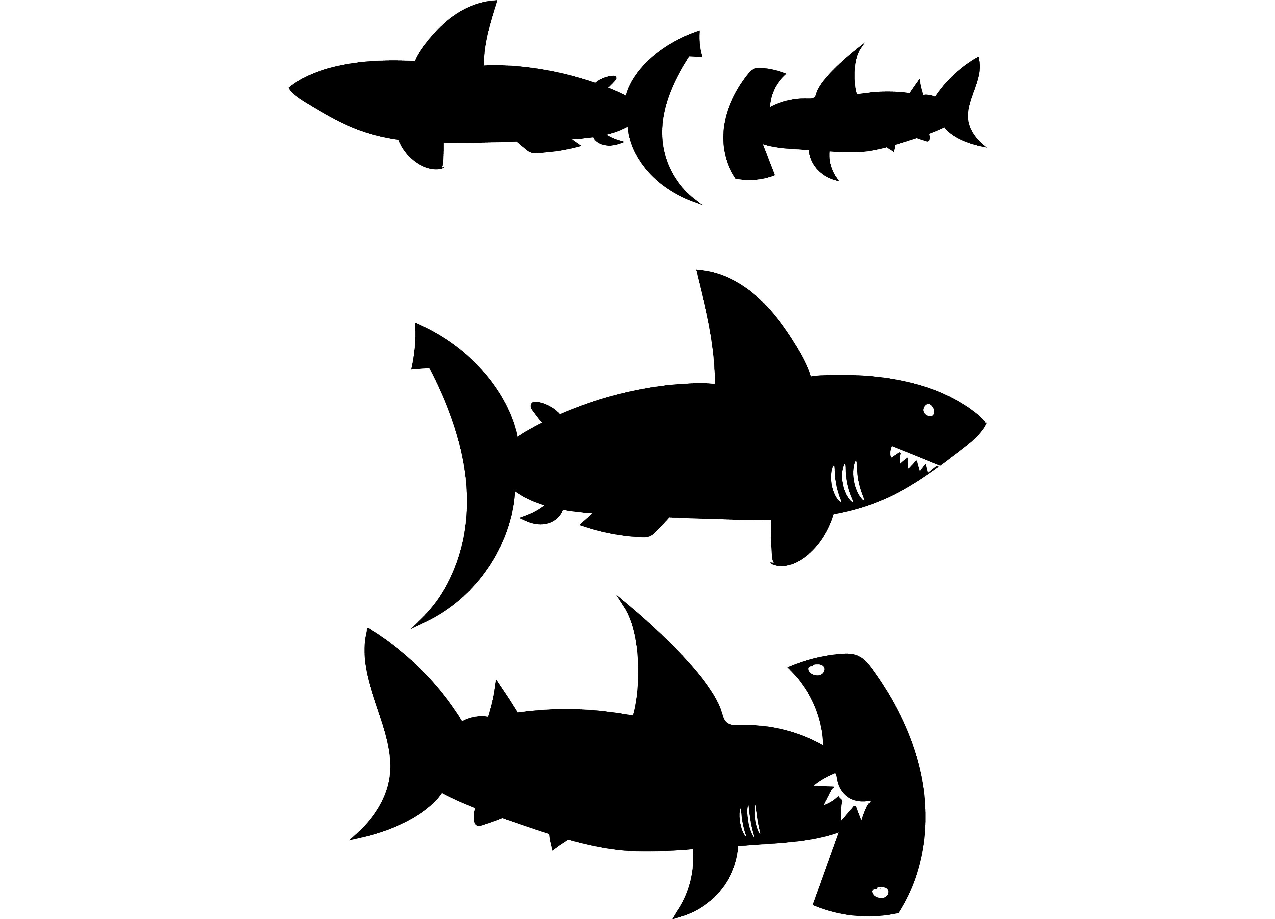 shark-01